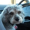 Top Cars for Dog Owners