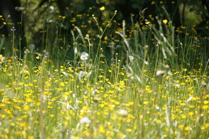 Summer meadow can cause hay fever